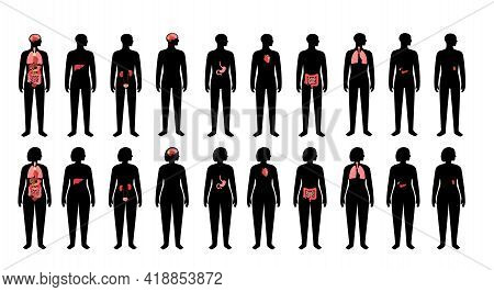 Internal Organs In Woman And Man Body. Brain, Stomach, Heart, Kidney, Medical Icon In Female And Mal