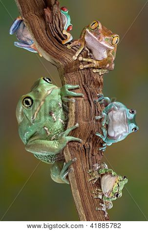 Froggies On A Branch