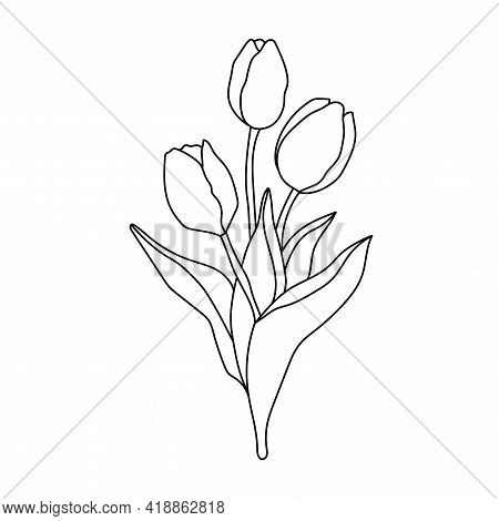 Hand Drawn Bouquet Of Tulips. Flowers Isolated On White Background. Three Tulips In Outline Style.