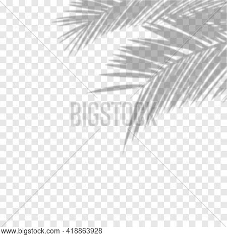 Transparent Shadow Overlay Effect. Vector Of Transparent Shadows Of Palm Leaf. Vector Illustration