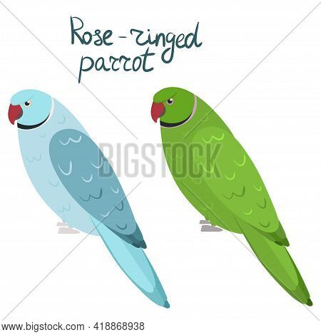 Rose-ringed Parakeet Or Ring-necked Parrot In Cartoon Style On White Background. Vector Hand Drawn I