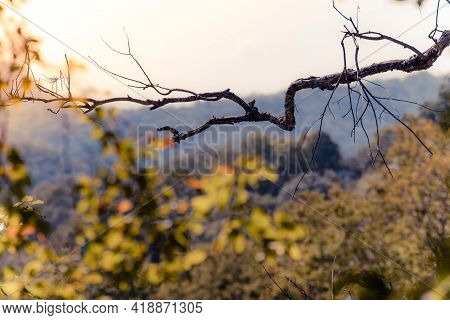 Leafless Dead Tree Branch In Front Of The Distant Mountain View In The Evening.