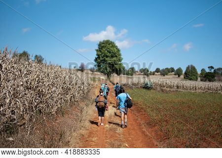 A Tourist Group With Backpacks Walks On A Dirt Road Between Corn And Chili Fields On A Hike From Kal