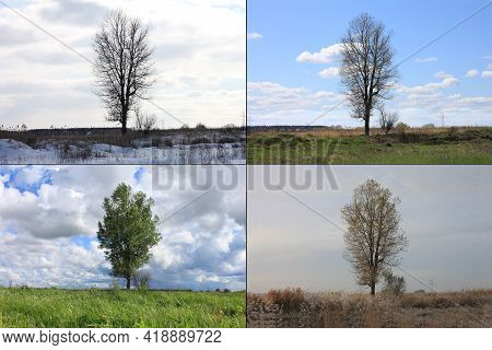 Abstract Image Of Lonely Tree In Winter Without Leaves On Snow, In Spring Without Leaves On Grass, I
