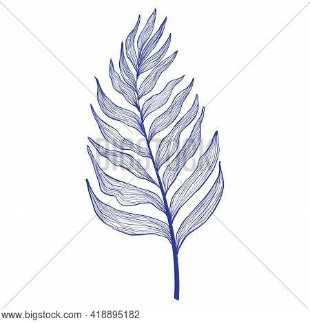 Hand Drawn Single Palm Tree Leaves In Linear Style. Minimalistic Trendy Tropical Palm Leaf In Contou