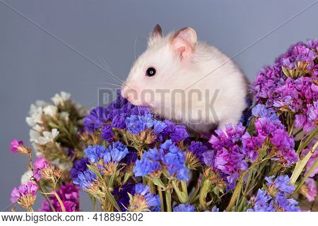 Fluffy Hamster Sits On The Flowers. Dried Flowers. Funny Hamster