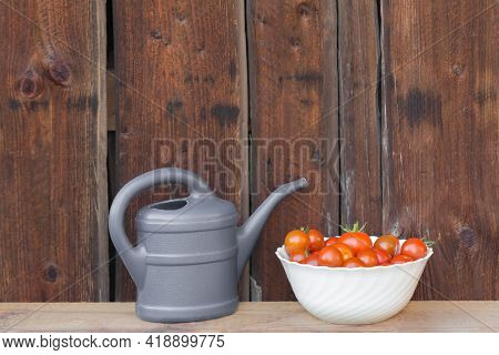 Harvest Red Tomatoes In White Bowl Next Gray Watering Can. Gardening Fresh And Juicy Vegetables From