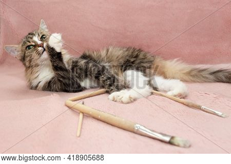 A Fluffy Cute Cat With Green Eyes Licks Its Paw. Cat Lies On A Pink Blanket. Paintbrushes Lie Around