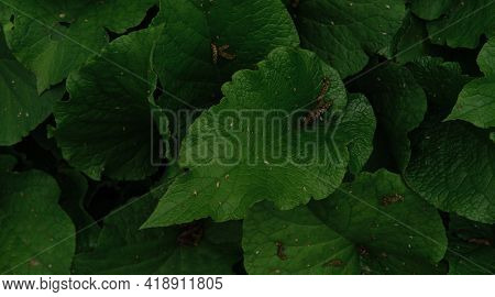 Minimalist Screensaver With Elements Of Nature And The Environment. Lots Of Bright Green Burdocks Cl