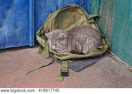 One Big Gray Cat Lies And Sleeps On A Green Backpack Against A Blue Wall Outside