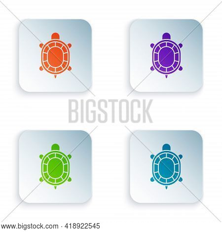 Color Turtle Icon Isolated On White Background. Set Colorful Icons In Square Buttons. Vector