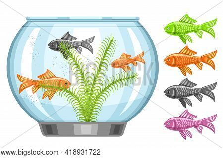 Vector Illustration Of Fish Tank, Aquarium With Swimming Goldfishes And Seaweed, Set Of Cut Out Mult
