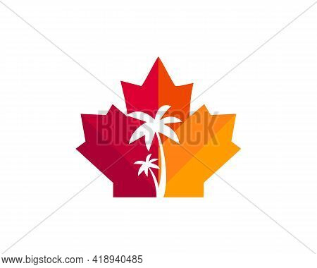 Maple Palm Tree Logo Design. Canadian Palm Logo. Maple Leaf With Palm Tree Vector