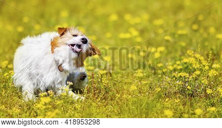 Cute Pet Puppy Scratching, Itching In The Grass With Flowers. Dog Flea In Spring, Summer Concept, We