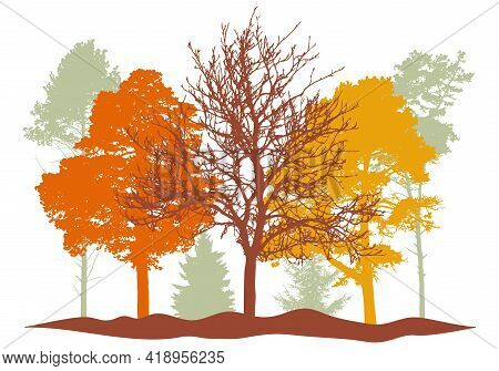 Autumn Woodland, Silhouette Of Bare Tree, Trees With Leaves And Spruces Tree And Pines. Beautiful Na