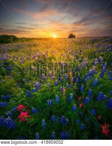 Stunning Sunset Over A Rural Texas Wildflower Field