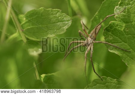 Spider Insect Macro View While Hunting On Wild Ecosystem, Animal Wildlife