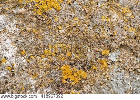 Rough Stone Texture With Moss. Concrete Wall Covered With Moss, Background For Designer