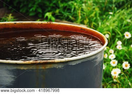 Water Barrel For The Garden, Collecting Rainwater