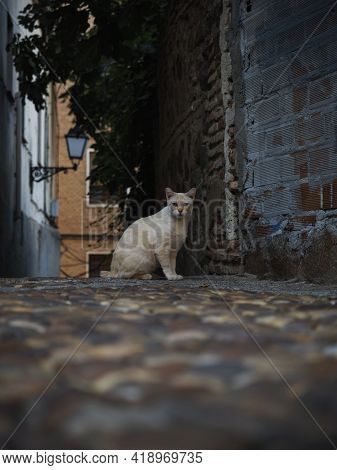 Closeup View Of Domestic Cat Sitting In Narrow Alley Lane Road Street At Old Rustic Mediterranean Tr