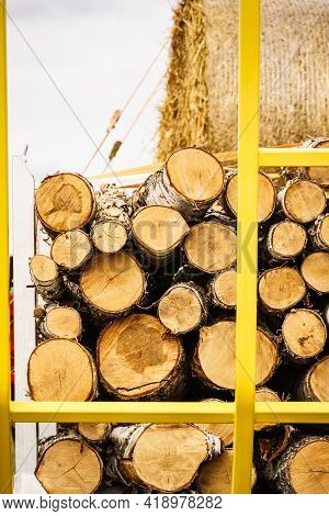 Timber Logging. Freshly Cut Tree Wooden Logs On Truck.