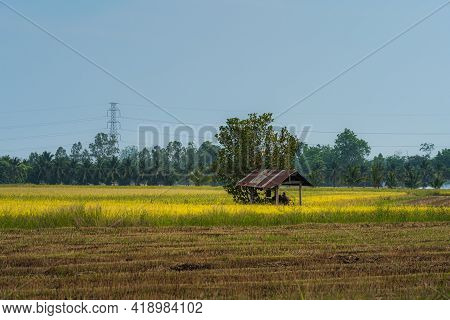 Old Wood Cottage And Scenic View Landscape Of Rice Field Green Grass With Field Cornfield Or In Asia