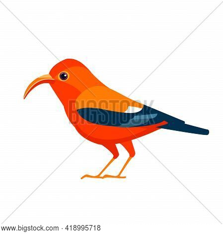 Red Bird Iiwi Hawaiian Honeycreeper. Endangered Birds Cartoon Flat Style Beautiful Character Of Orni