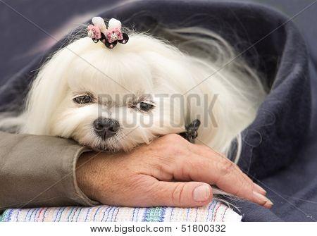 Cute dog resting