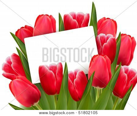 Red Tulips And Blank Of Card. Vector.