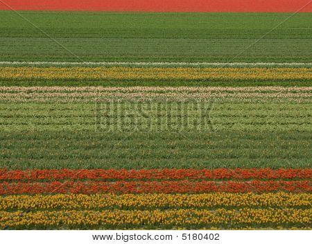 Dies ist holland
