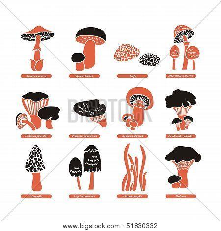 Edible Mushrooms Set