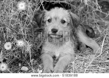 Sad lonely homeless puppy looking in the eyes. B&W poster