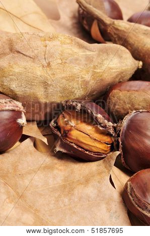 some roasted chestnuts and sweet potatoes, typical snack in All Saints Day in Catalonia, Spain poster