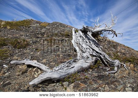 Twisted Tree Trunk At Torres Del Paine