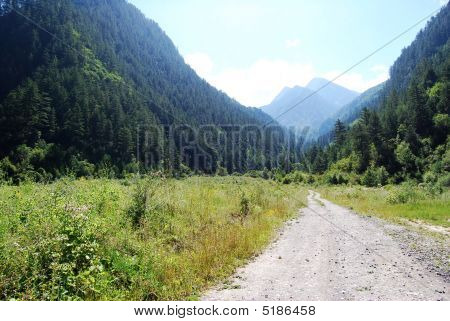 road in nature