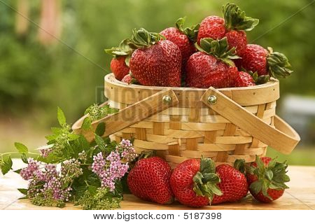 Basket of Strawberries