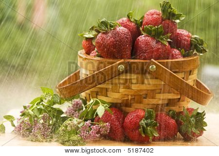 Strawberries In The RAIN