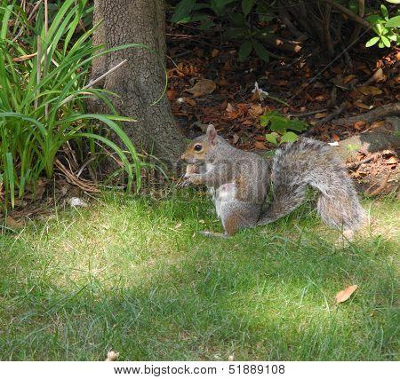 Little Squirrel is Happy With Her Reward
