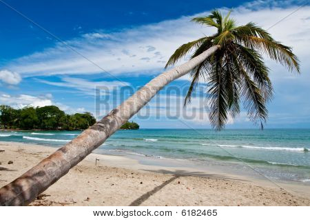Palm Trees On The Beach Near With Blue Sky