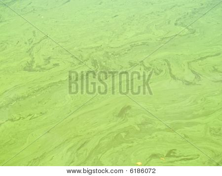 Polluted Water Background