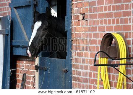Farm house inhabitant