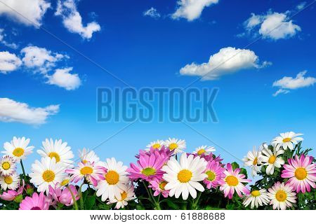 Flower Bed And Blue Sky