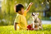 Young Asian boy playing with Alaskan Klee Kai puppy sitting on grass poster