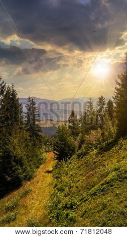Evening Walks In Mountain Forest At Sunset