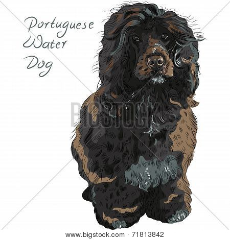 Vector Portuguese Water Dog