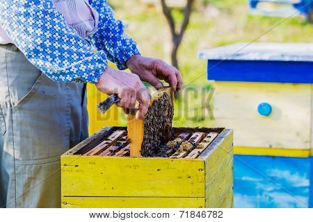 Beekeeper Checking Hive