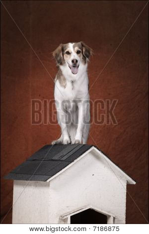 dog on his house