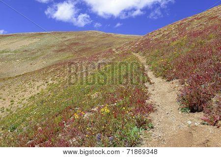 Alpine tundra in fall colors