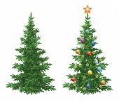 Christmas holiday spruce fir trees, natural and with ornaments, colorful balls and golden stars isolated on white background. Eps10, contains transparencies. Vector poster