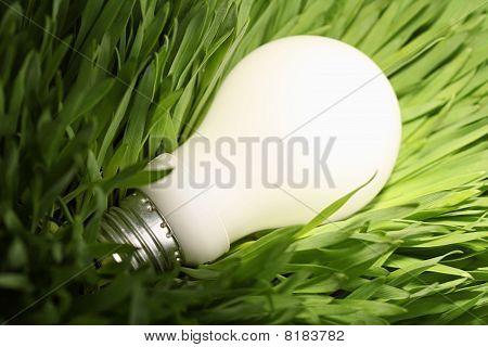 Glowing Energy Saving Lightbulb On Green Grass